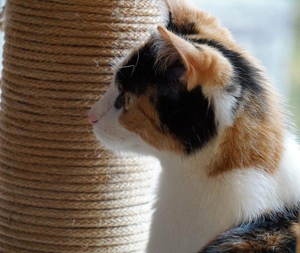 Comment décorer le salon pour qu'un chaton puisse faire ses griffes